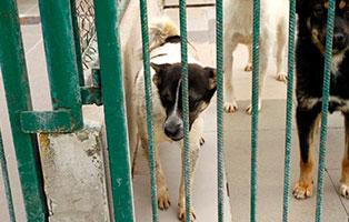 huendin-1Jahr-aufnahmepatenschaft Wieder suchen wir für 4 Hunde Aufnahmepaten
