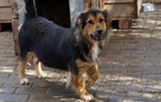 hund-bienchen-aufnahmepatenschaft-unterheinsdorf Aufnahmepatenschaft für Auslandshunde