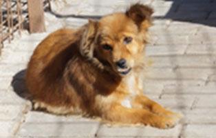 hund-dolly-aufnahmepatenschaft-unterheinsdorf Aufnahmepatenschaft für Auslandshunde