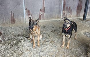 hunde-liegeflaechen-neu-unterheinsdorf-freunde Aktuelles - Tierheim Unterheinsdorf