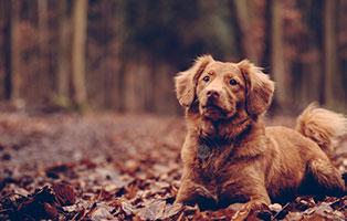 hunde-ratgeber Tierratgeber - Was Sie über Ihr Tier wissen müssen