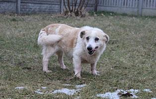 hundeomi-uralt-aufnahmepatenschaft Wieder suchen wir für 4 Hunde Aufnahmepaten