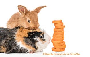kaninchen.meerschweinchen-themenwelten Kaninchen & Meerschweinchen – Haustiere für Kinder?