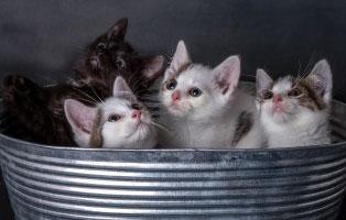 katzen-ratgeber-1 Tierratgeber - Was Sie über Ihr Tier wissen müssen