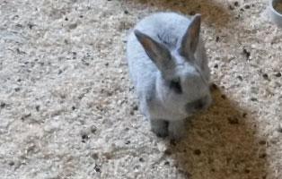 kleintiere-ratgeber Tierratgeber - Was Sie über Ihr Tier wissen müssen
