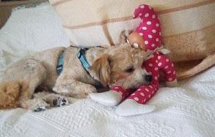 paulchen-gluecklich-vermittelt-schläft Tierische Geschichten - Lustiges und spannendes