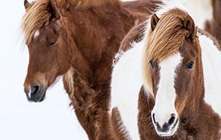 pferde-ratgeber Tierratgeber - Was Sie über Ihr Tier wissen müssen