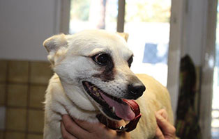 polenhund-fine-zahnschmerzen Auslandshunde - Aufnahmepatenschaft