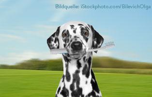 zahnpflege-hund Ein Tierheimhund zieht ein