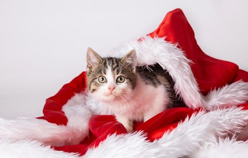 Katze-weihnacht Adventmarkt im Tierheim Wollaberg