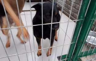 hündin-älter-seit-2-Jahren-im-heim 9 Hunde aus einem polnischem Tierheim, suchen Aufnahmepaten