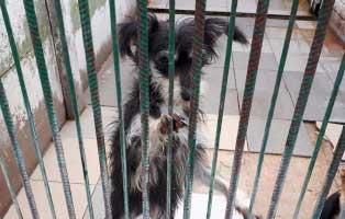 hündin-1-Jahr-kam-als-welpe 9 Hunde aus einem polnischem Tierheim, suchen Aufnahmepaten
