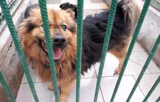 hündin-7jahre-seit-5Jahren-im-heim 9 Hunde aus einem polnischem Tierheim, suchen Aufnahmepaten