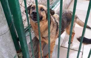 hündin-7jahre-seit-6Jahren-im-heim 9 Hunde aus einem polnischem Tierheim, suchen Aufnahmepaten
