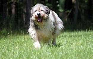 hund-annouschka-verstorben-rennt Annouschka -  2,5 Jahre warst du für uns da