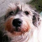 hund-annouschka-verstorben-schaut-150x150 Annouschka -  2,5 Jahre warst du für uns da
