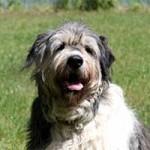 hund-annouschka-verstorben-wiese-150x150 Annouschka -  2,5 Jahre warst du für uns da