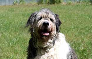 hund-annouschka-verstorben-wiese Trauriges - wenn ein Tier die Regenbogenbrücke überquert