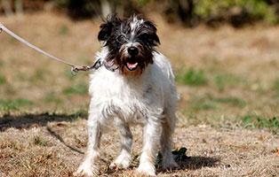 hunde-anna-gluecklich-vermittelt Glücklich vermittelt - Tiere haben ein Zuhause
