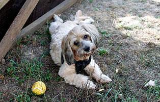 hunde-motte-gluecklich-vermittelt Glücklich vermittelt - Tiere haben ein Zuhause