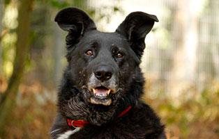 hunde-ronny-gluecklich-vermittelt Glücklich vermittelt - Tiere haben ein Zuhause