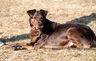 hunde-stella-gluecklich-vermittelt Glücklich vermittelt - Tiere haben ein Zuhause