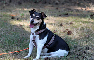 hunde-trixie-gluecklich-vermittelt Glücklich vermittelt - Tiere haben ein Zuhause