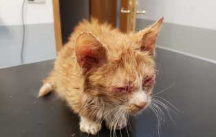 kater-katzenschnupfen-notfellchen-wollaberg-augen Unterstützen Sie das Tierheim Wollaberg