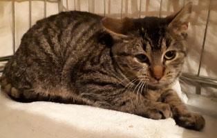katze-garfield-katzenschnupfen Hilfe für unsere Katzenschnupfen-Kinder