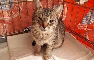 katze-giselda-katzenschnupfen Hilfe für unsere Katzenschnupfen-Kinder