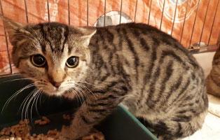 katze-greta-katzenschnupfen Hilfe für unsere Katzenschnupfen-Kinder