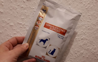 katze-spezialfutter-katzenschnupfen Hilfe für unsere Katzenschnupfen-Kinder