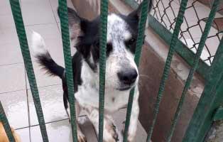 rüde-2jahre-seit-einem-Jahr-im-heim 9 Hunde aus einem polnischem Tierheim, suchen Aufnahmepaten