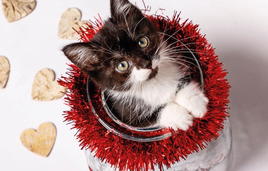 tierische-weihnacht-thueringen-ohne Tierische Weihnacht in der Katzenstation Thüringen