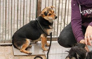 Huendin-1 7 Hunde aus polnischem Tierheim suchen Aufnahmepaten