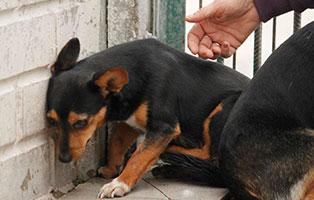 Huendin-2 7 Hunde aus polnischem Tierheim suchen Aufnahmepaten