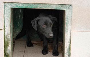 Huendin-3 7 Hunde aus polnischem Tierheim suchen Aufnahmepaten