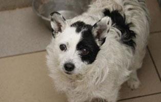 Huendin-4 7 Hunde aus polnischem Tierheim suchen Aufnahmepaten