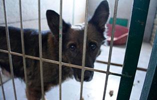 Hundeomi 7 Hunde aus polnischem Tierheim suchen Aufnahmepaten