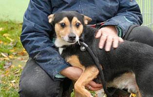 Ruede-1 7 Hunde aus polnischem Tierheim suchen Aufnahmepaten