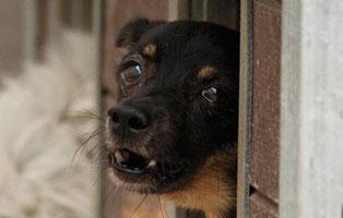 Ruede-2 7 Hunde aus polnischem Tierheim suchen Aufnahmepaten