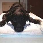 junghund-eingefangen-luna-untersuchung-150x150 Lunas Leidensweg ist nun hoffentlich vorbei