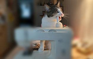 kater-findus-schneiderlein Schicken Sie uns Ihre Lesergeschichte für Tierfreunde