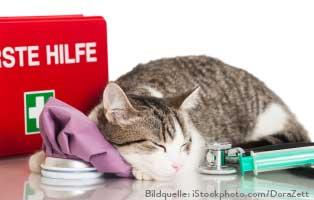 katzen-erste-hilfe Katzenratgeber