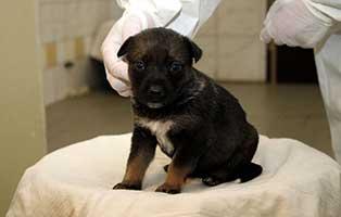 labrador-mischling-welpen-huendin1 10 Labrador Mischlingswelpen suchen Start-ins-Leben Paten