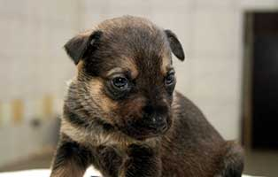 labrador-mischling-welpen-huendin4 10 Labrador Mischlingswelpen suchen Start-ins-Leben Paten