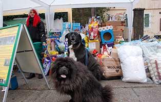 tierische-weihnacht-tierschutzliga-dorf-hund Aktuelles aus den Tierheimen