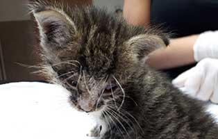 tierrundschau-katze Ottokar - Ein wildes Leben hat Spuren hinterlassen