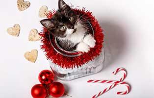 weihnachten-tier-geschenk Veranstaltungen