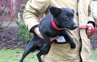 aufnahmepatenschaft-huendin-3-Jahre Wir suchen Aufnahmepaten für 7 Hunde aus polnischem Tierheim